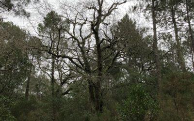 La forêt du Vieux Pilat