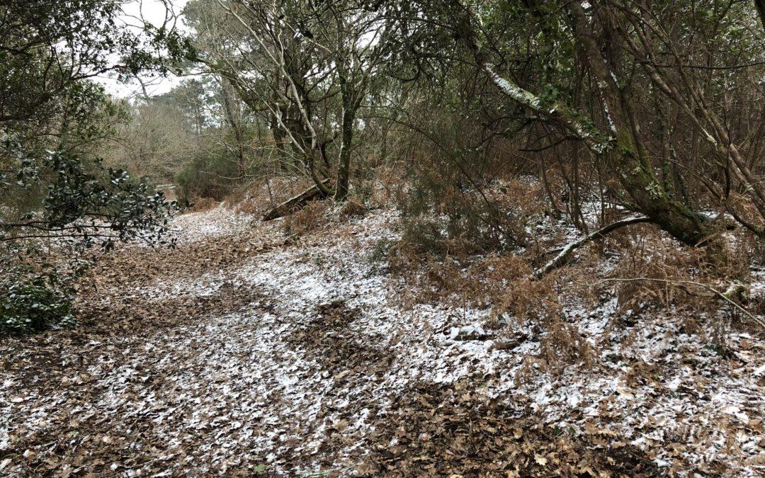 La forêt du Vieux Pyla reste en 2AU